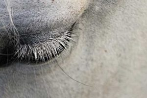 Pferdegedichte